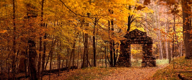به پرندگان بگو  شاخه هایت را فراموش نکنند.  پاییز  آخرین حرفِ درخت نیست