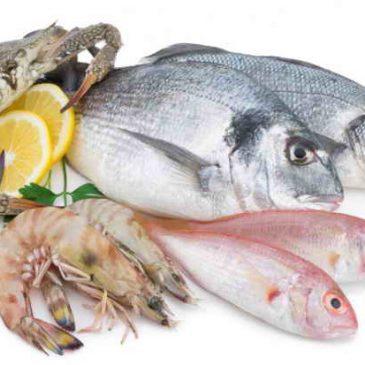 معرفی کامل ماهیهای جنوب